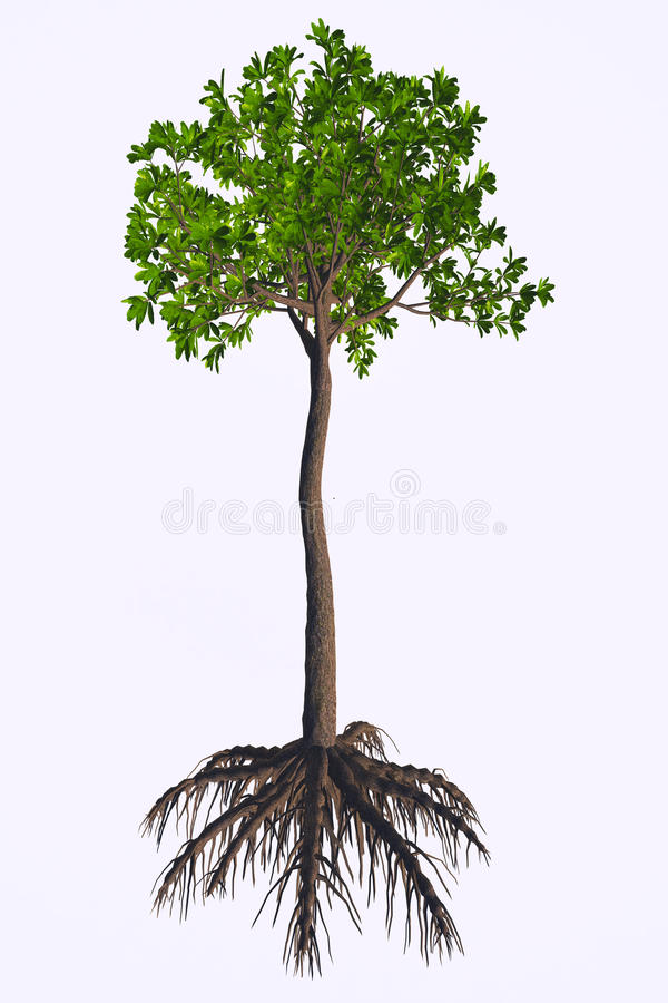 Glossopteris sp Tree. Glossopteris was a seed plant tree that lived in the Permian to the Triassic Periods royalty free illustration