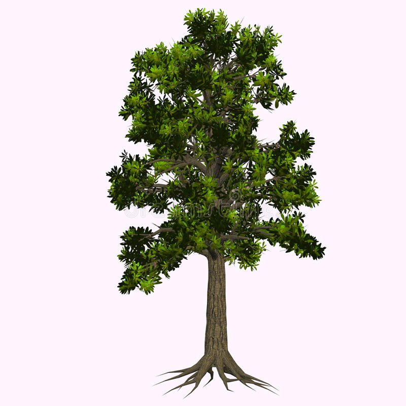 Glossopteris Tree. Glossopteris is the most important of those Pteridosperms (seed plants) who dominated the Permian period which is now extinct royalty free illustration