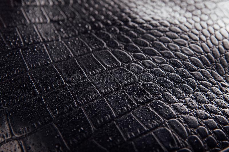 Glossy smooth crocodile or snake skin leather background. Black texture covered with water drops royalty free stock images