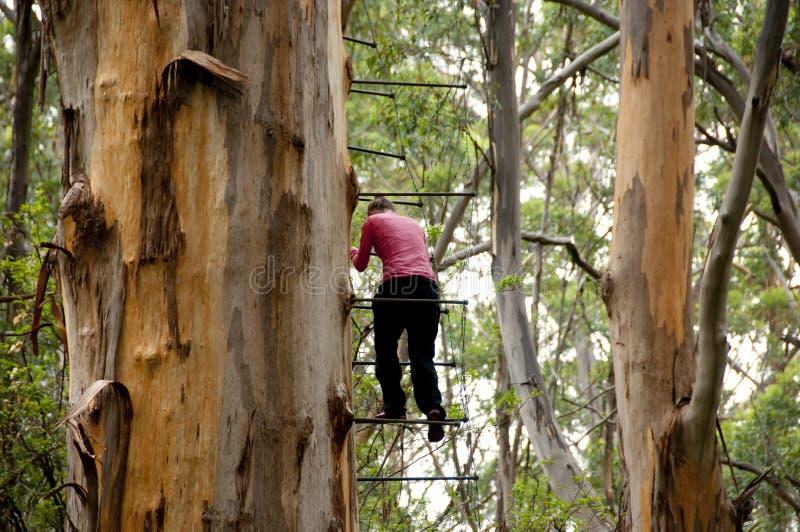 Gloucester Drzewna wspinaczka zdjęcia stock
