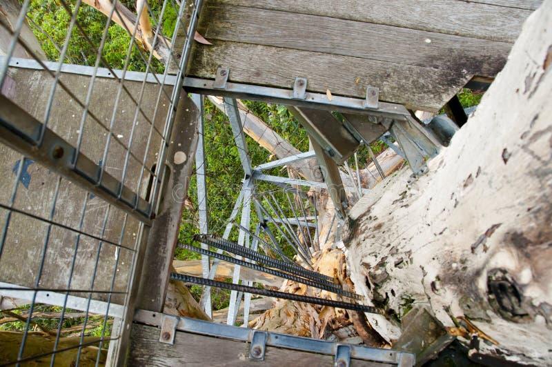 Gloucester Drzewna wspinaczka zdjęcia royalty free