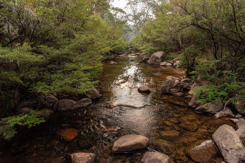 Gloucester flod australia i torka, låg flod royaltyfri fotografi