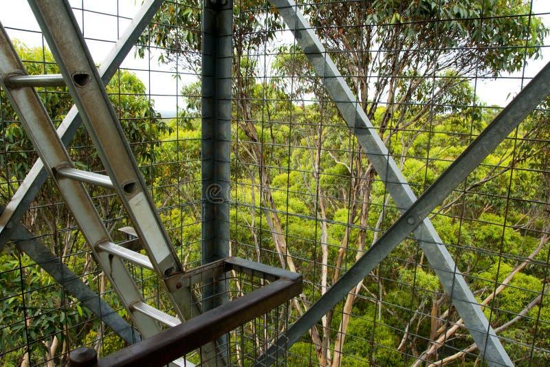 Gloucester Tree Climb. Pemberton - Australia royalty free stock photography