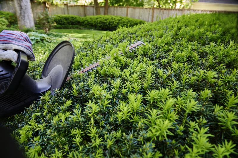 yew hedge stock photos download 660 royalty free photos