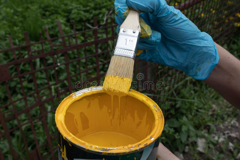 Gloved hand holding a brush soaked in yellow paint, excess paint flows back into the can stock image