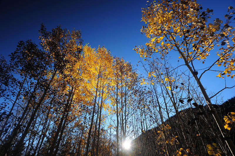 Download Glow tree stock photo. Image of yellow, autumn, forest - 27540270