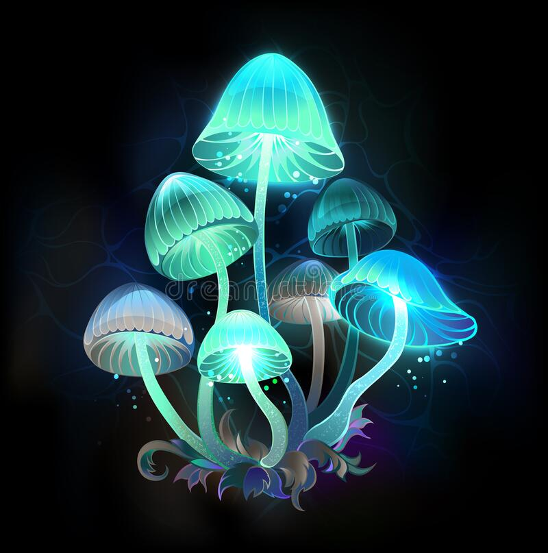 Free Glowing Blue Toadstools On Black Background Stock Photos - 213300723