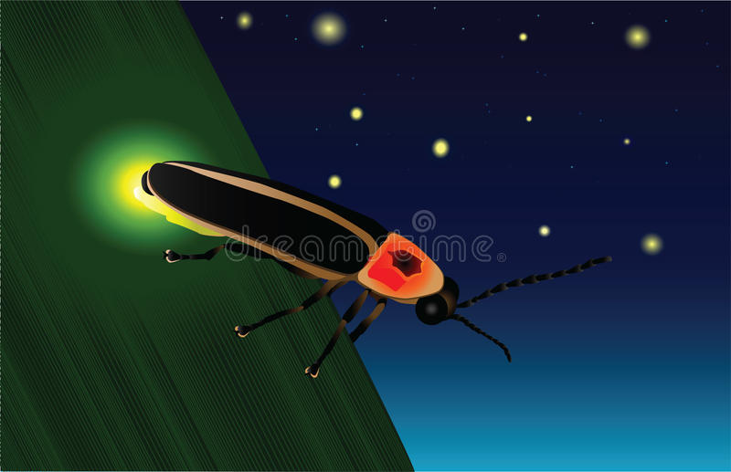 Download Glowing Firefly Stock Vector Illustration Of Summer