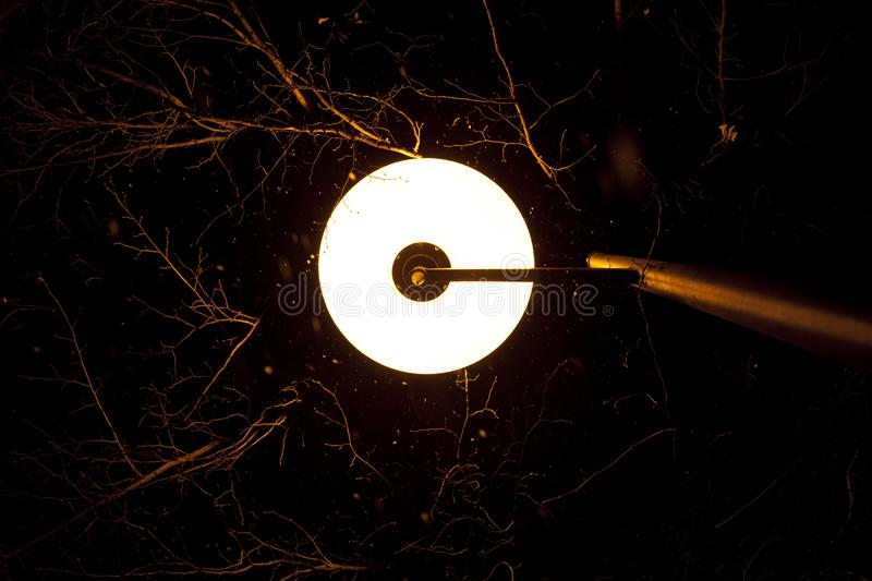 Glowing lamppost illuminated the branches trees stock photography
