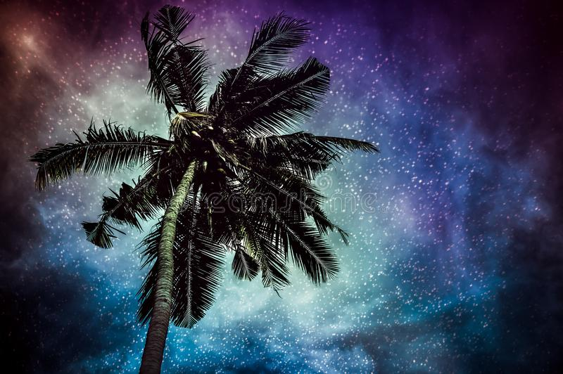 Natural glowing of the milky way and the starry with coconut plam. Glowing of the milky way galaxy in the night sky with many stars above coconut plam royalty free stock image
