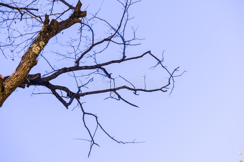 Glowing old and dry tree branches over blue sky stock image
