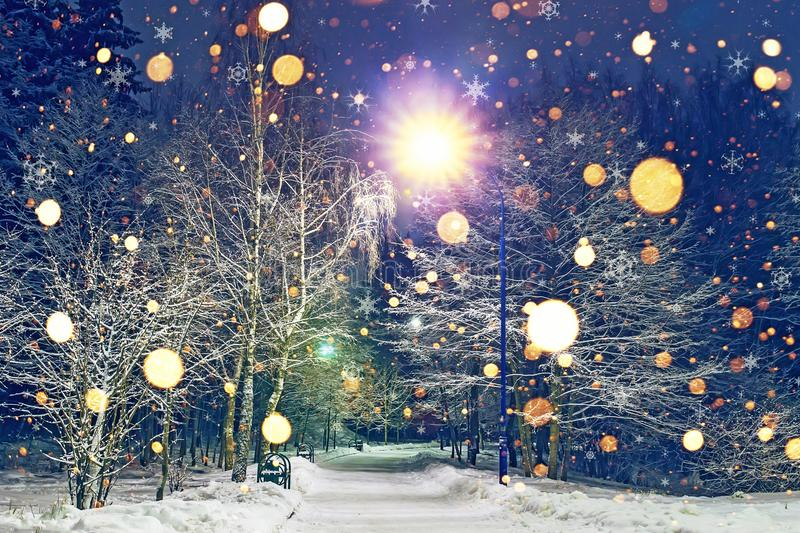 Glowing snowflakes fall in winter night park. Theme of Christmas and New Year. Winter scene of night park in snow royalty free stock image
