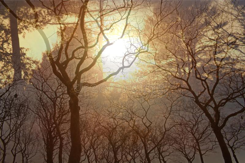 Sun and trees in winter. The glowing sun sets behind these leafless trees in winter royalty free stock photography