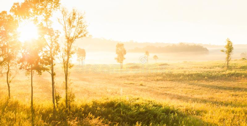 Glowing sunrise shines onto the mist and golden grassland royalty free stock photos
