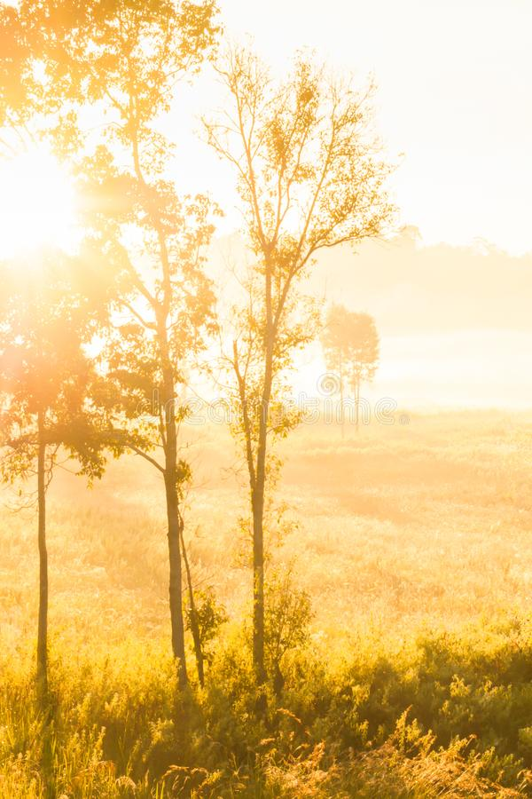 Glowing sunrise shines onto the mist and golden grassland stock photos
