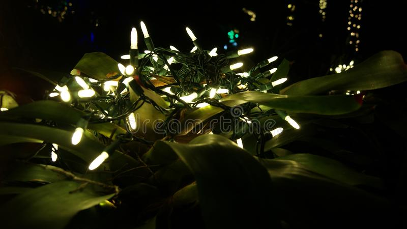 Glowing white Christmas lights, close up over a a tropical plant for garden decorations in a dark black night background stock photos