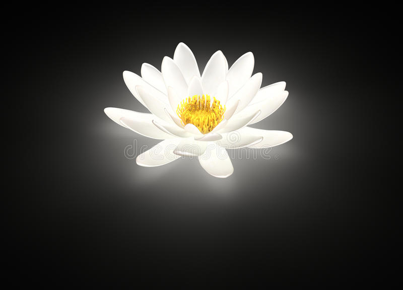 Glowing white lotus flower water lily stock photo image of calm download glowing white lotus flower water lily stock photo image of calm glow mightylinksfo