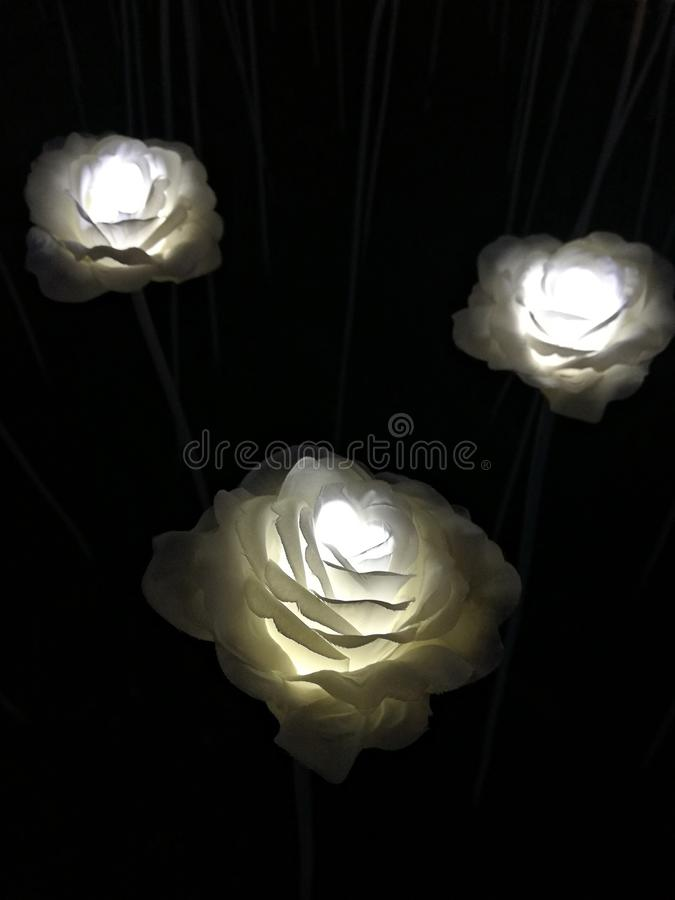 Glowing white roses on the night street. Led flowers in the street in Seoul stock photo