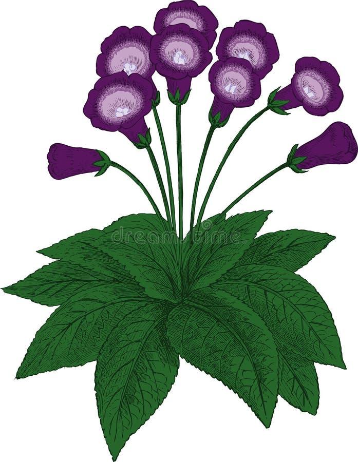 Gloxinia flower. Vector stock photo