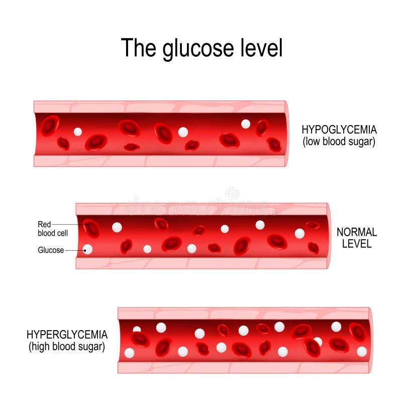 Glucose dans le vaisseau sanguin illustration libre de droits