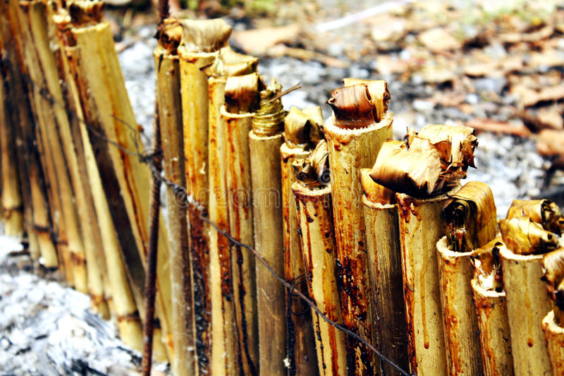Glutinous рис зажаренный в духовке в бамбуковых соединениях стоковые изображения