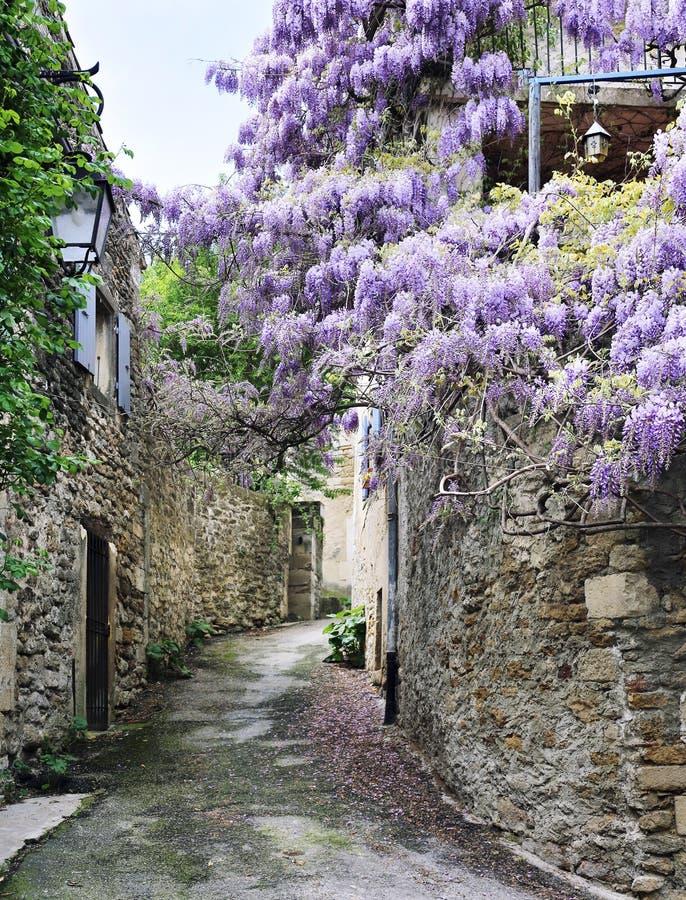 Glycine de floraison sur la rue du village français photo libre de droits