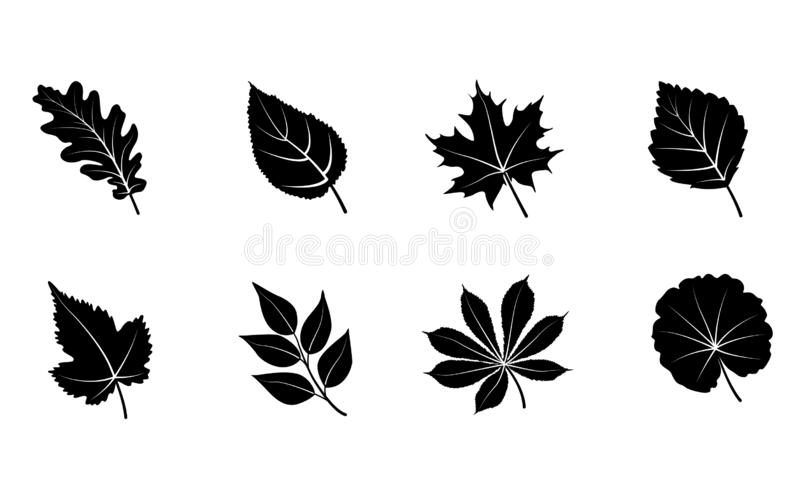 Glyph autumn leaves set. Isolated on white background. Black silhouettes leaves. Vector illustration royalty free illustration