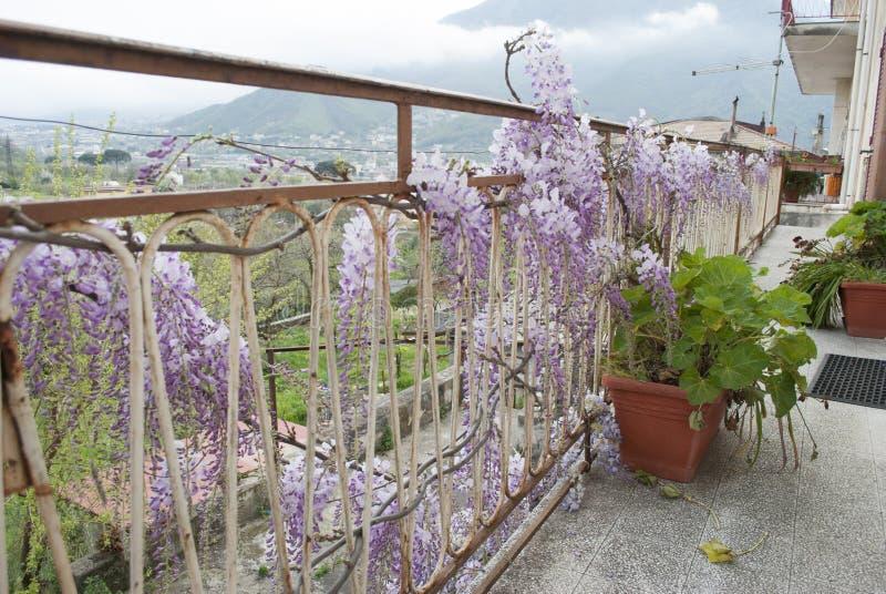 Glyzinie-Anlage in einem alten Hof mit anderen Blumen stockbilder