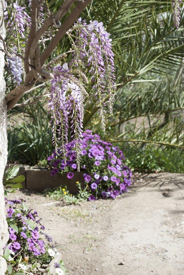 Glyzinie-Anlage in einem alten Hof mit anderen Blumen stockbild