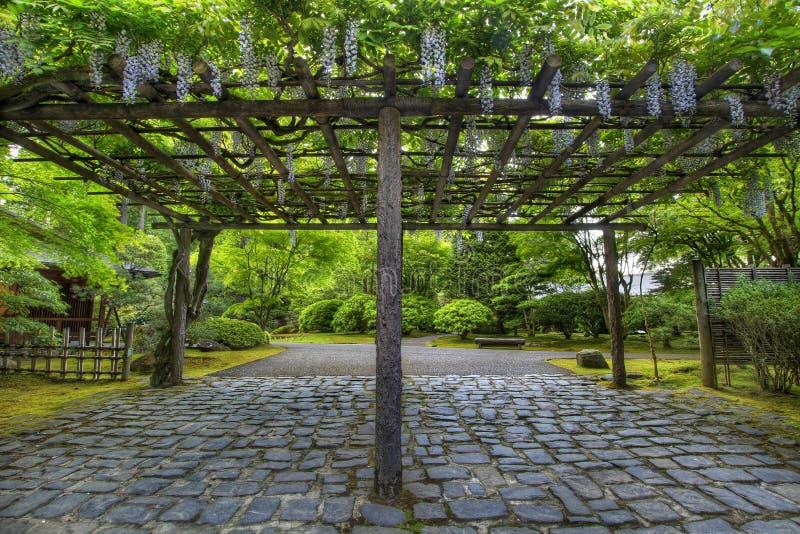 Glyzinien in der Blüte Portland-am japanischen Garten-Pfad lizenzfreie stockfotos