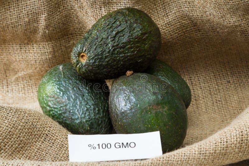 GMO avokadon arkivfoton