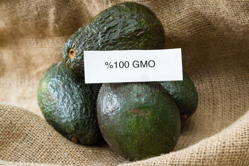 GMO avokadon royaltyfria bilder