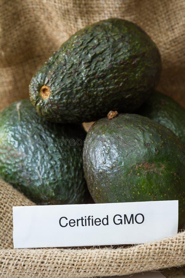 GMO avokadon arkivbild