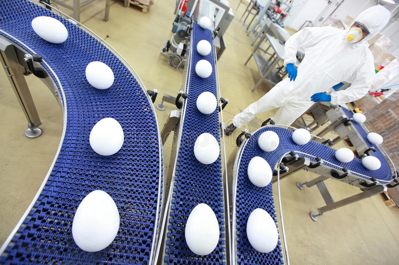 Gmo factory - automation. Fully protected in white uniform engineer at xxl size egg production line in gmo factory stock photo
