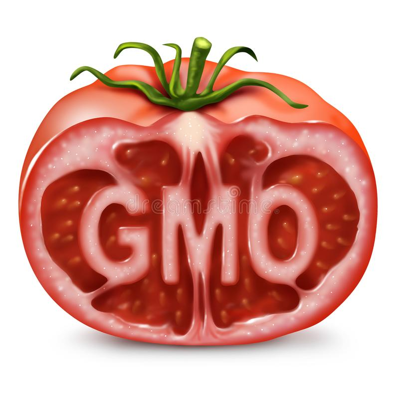 GMO Food Symbol. As a genetically modified organism and genetic engineering in produce as a cut tomato with text inside as in a 3D illustration style stock illustration