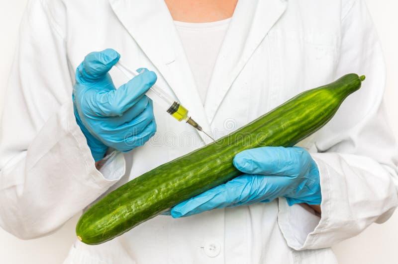 GMO forskare som injicerar flytande från injektionssprutan in i gurkan arkivfoto