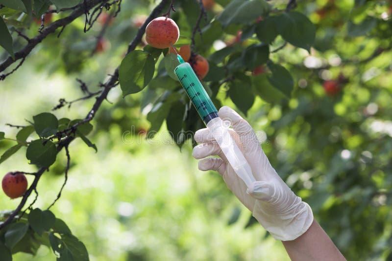 GMO fruit. Genetically modified food. Genetic engineering stock photo