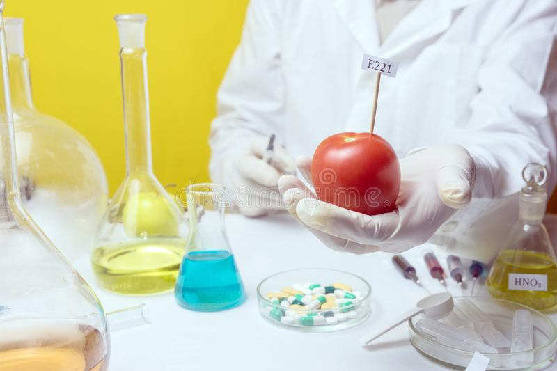GMO Genetically modified food in lab concept. lab assistant Food safety laboratory procedure, analysing fruits from the market. Food safety laboratory procedure royalty free stock image
