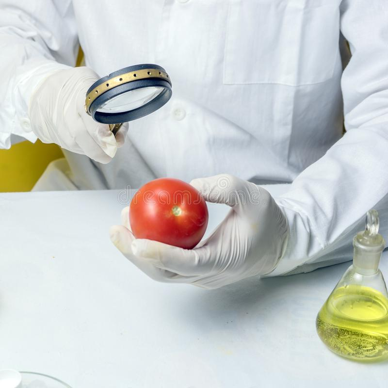 GMO Genetically modified food in lab concept. lab assistant Food safety laboratory procedure, analysing fruits from the market. Close up stock photos
