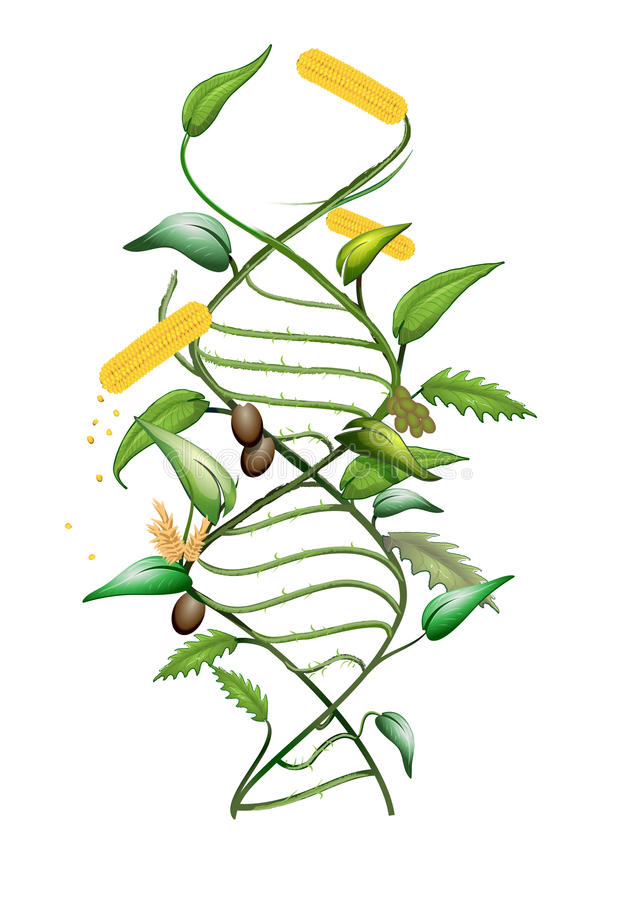 GMO DNA. Illustration of a GMO modified plant and DNA spiral stock illustration