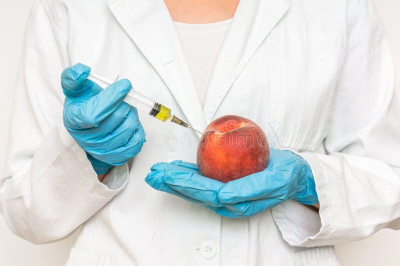 GMO naukowa wstrzykiwania ciecz od strzykawki w brzoskwinię obraz stock