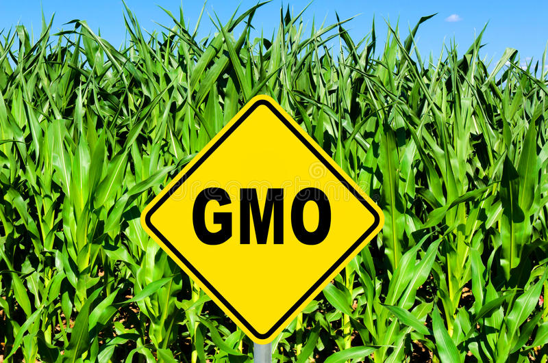 Download GMO sign stock image. Image of frying, eating, modified - 36378425