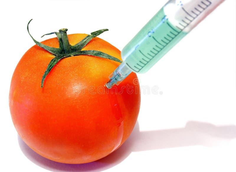 GMO tomato 1 royalty free stock image