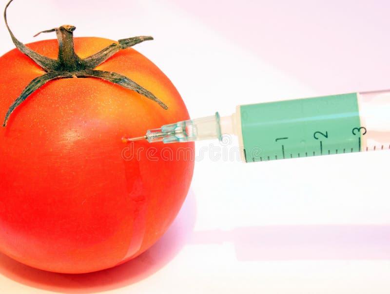 Download GMO tomato stock photo. Image of injection, modified, tomato - 173080