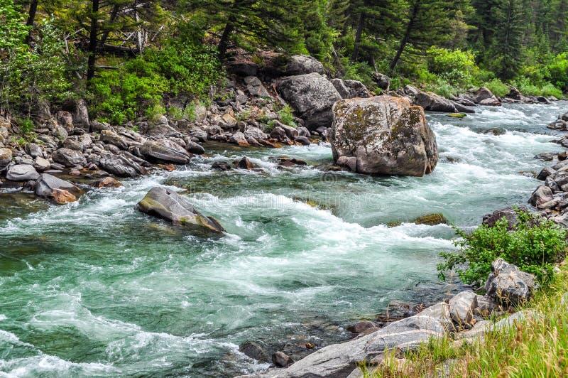 Gnanie gwałtowni Gallatin rzeka zdjęcie royalty free