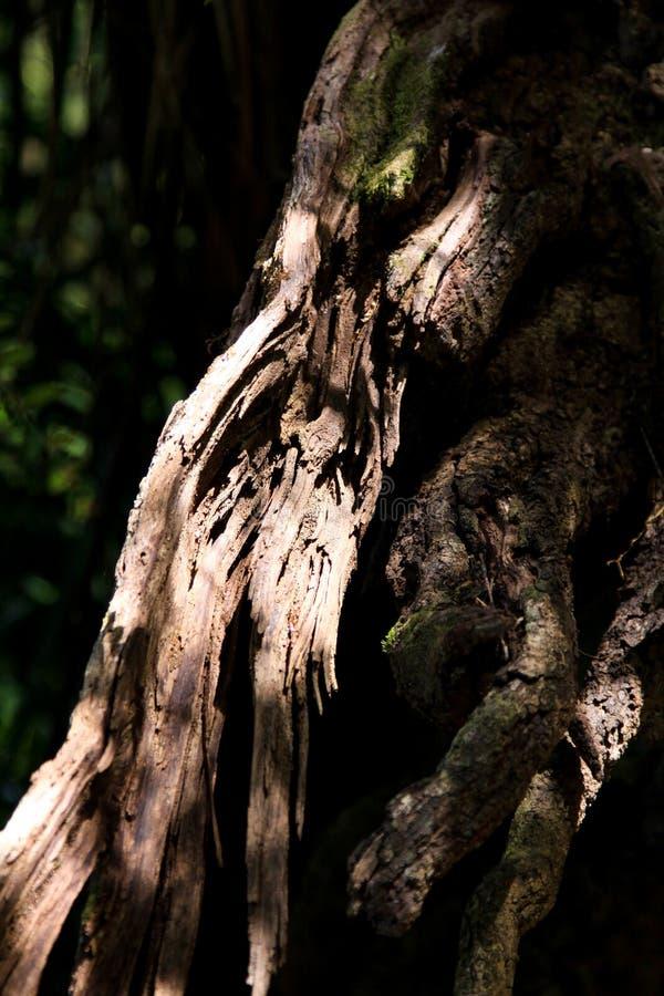 Gnarled дерево стоковое фото rf