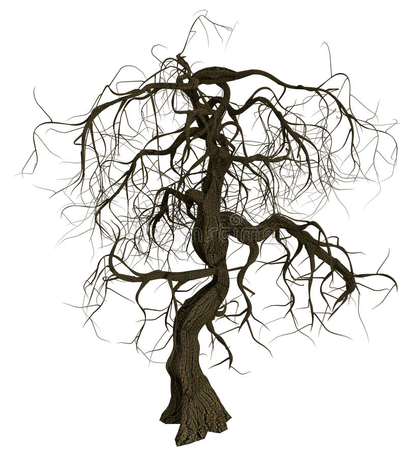 Gnarled old tree with bare branches. Gnarled and scary old tree with bare branches on white background stock photo