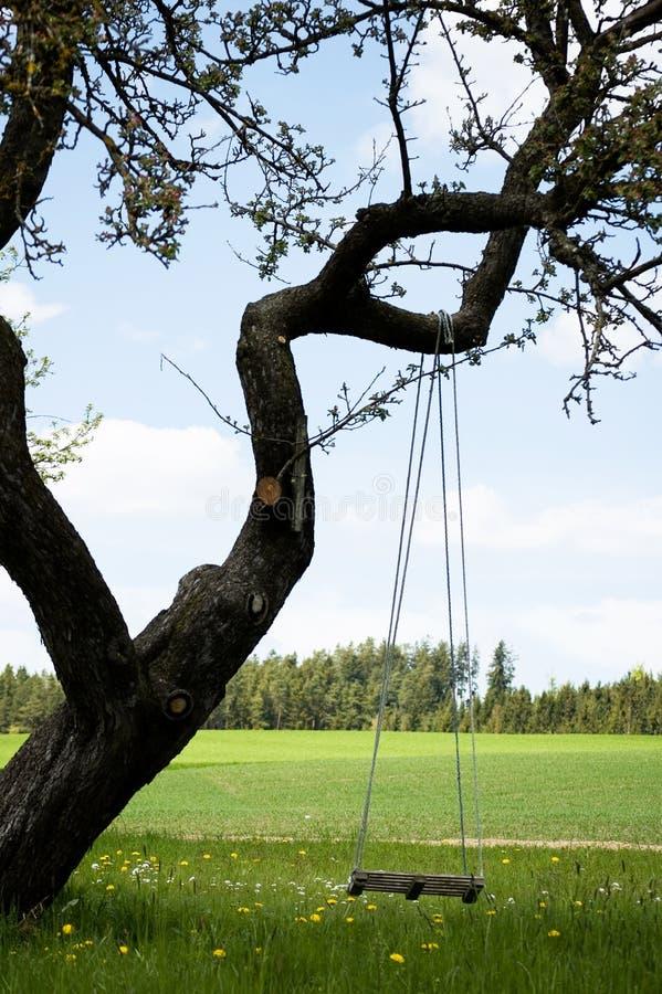 gnarly δέντρο ταλάντευσης στοκ εικόνες με δικαίωμα ελεύθερης χρήσης