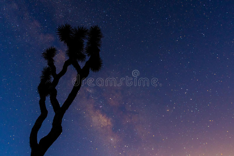 A Gnarly Joshua Tree is Silhouetted by the Milk Way. In early morning royalty free stock photo