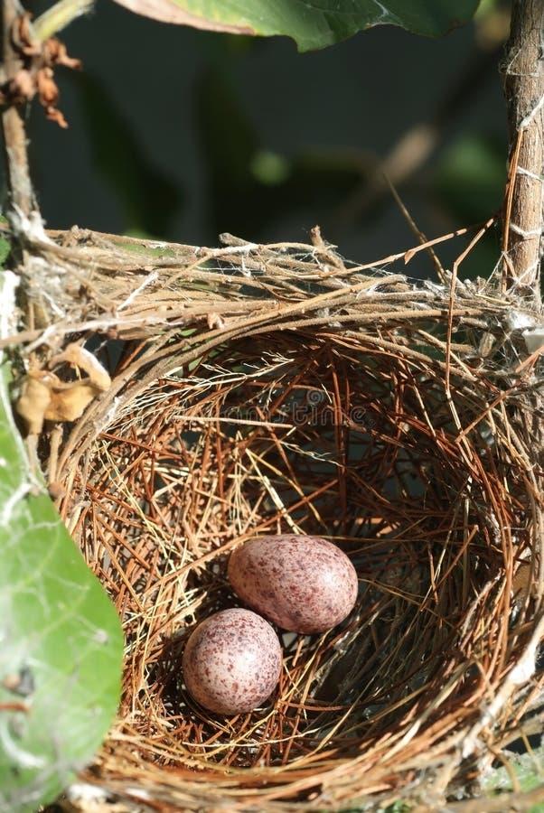 Download Gniazdeczko (1) i jajka obraz stock. Obraz złożonej z gałąź - 28805293